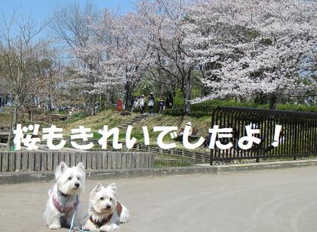 Photo_21