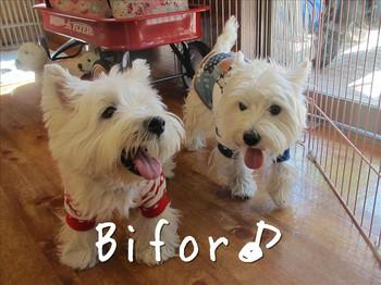 Bifor_2